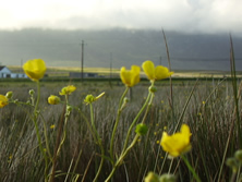 Spring Flowers and view of Slievemore.